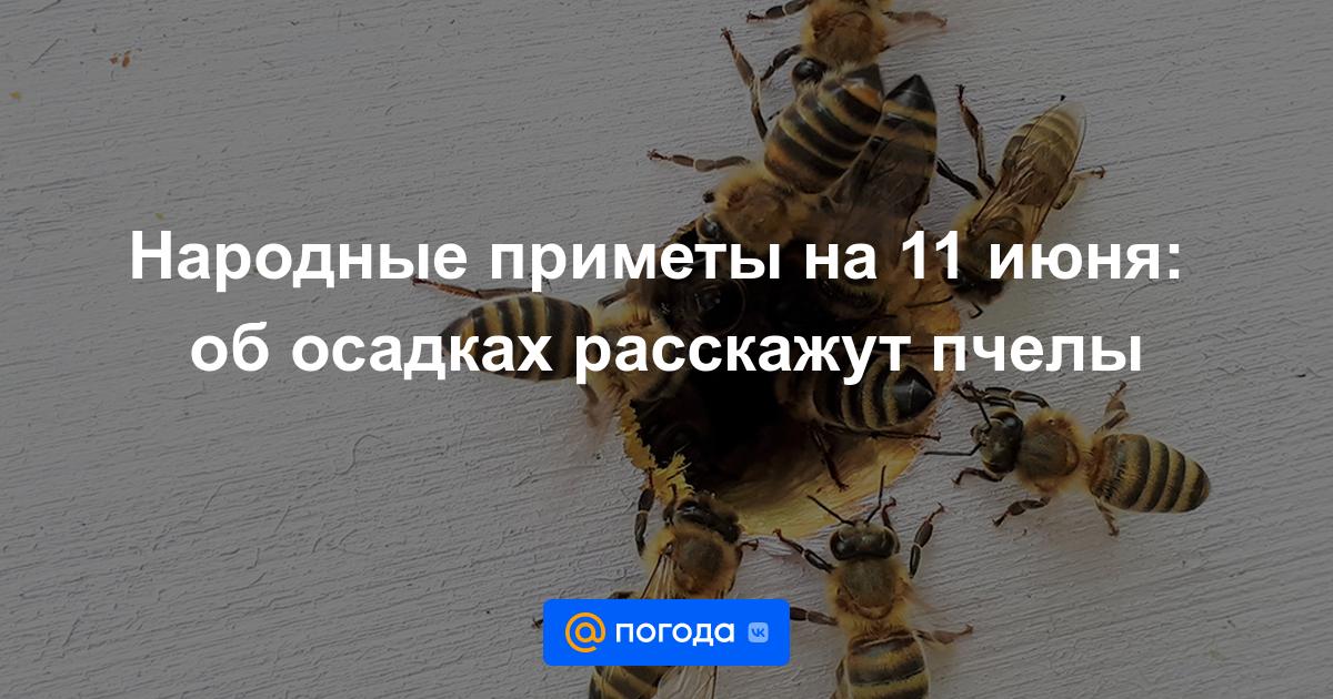 Народные приметы на 11 июня: об осадках расскажут пчелы