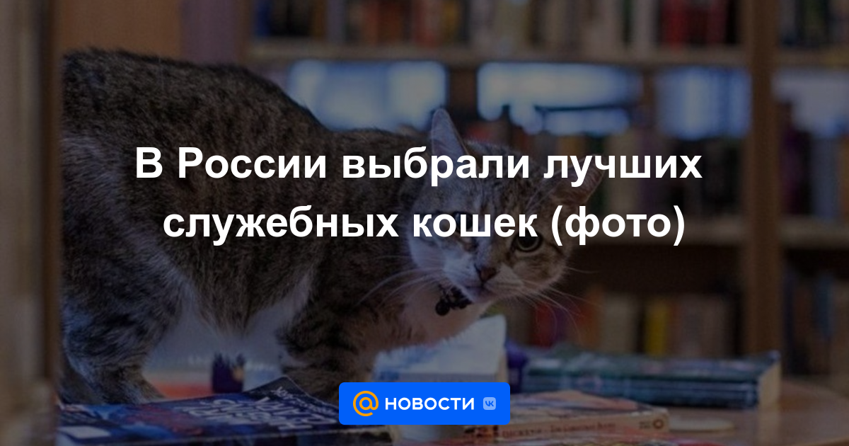 В России выбрали лучших служебных кошек (фото)